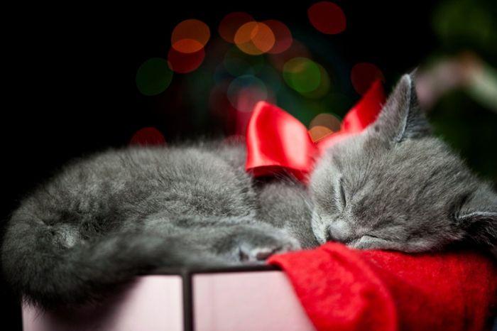 котенок на подарок